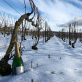 Champagne Serge Rafflin Blanc de Blancs Brut